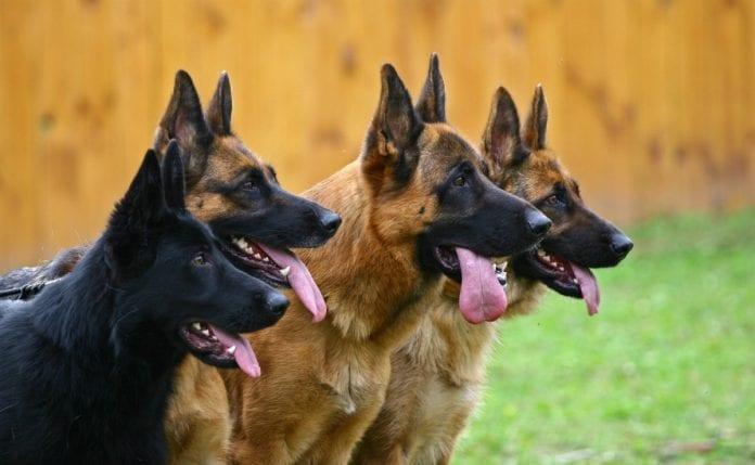 Dog business in nigeria