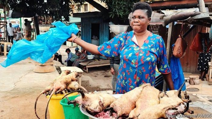 Profitability of grasscutter farming in Nigeria