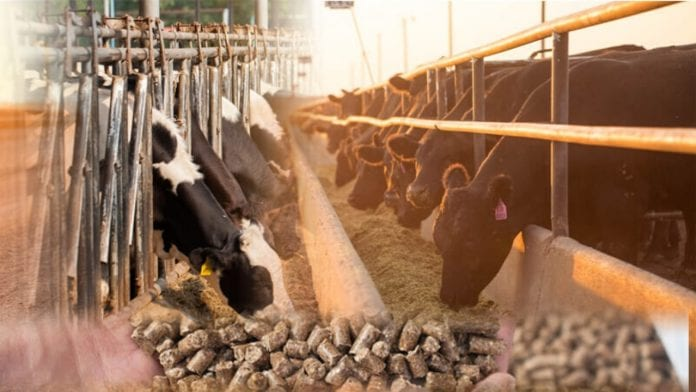 How to make money with livestock feed production in Nigeria